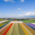Bollenvelden bij Lisse, Zuid-Holland