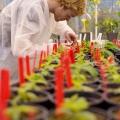 Plantenonderzoeker, Wageningen University