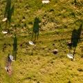 Koninkspaarden en Galloway-rund in natuurgebied De Blauwe Kamer, Utrecht